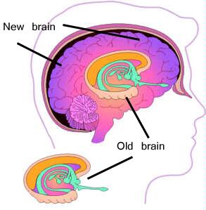 old brain, new brain